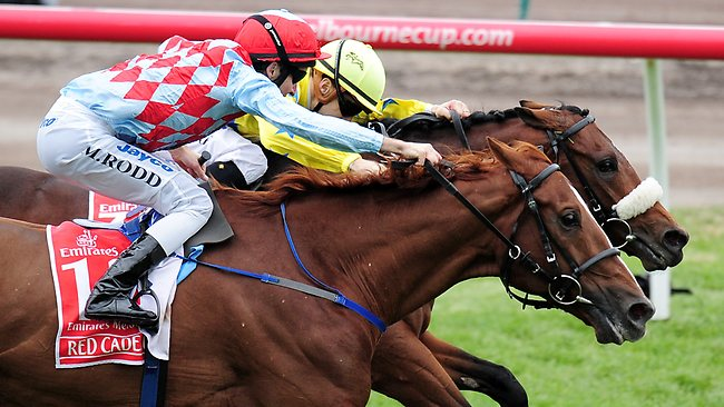 melbourne cup cruises   save up to 40 from sydney amp brisbane